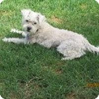Adopt A Pet :: Angel Baby - Irvine, CA