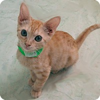 Adopt A Pet :: Thunder Paws - The Colony, TX