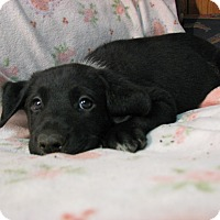 Adopt A Pet :: Spoticus - Bowie, MD