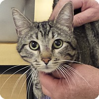 Adopt A Pet :: JULIAN - Diamond Bar, CA