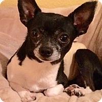 Adopt A Pet :: Chalupa - Edmond, OK