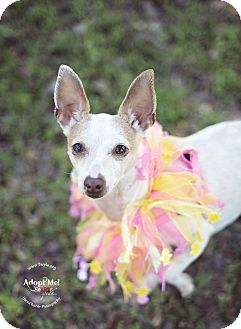 Chihuahua Dog for adoption in Kingwood, Texas - Phoebe