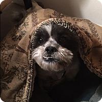 Adopt A Pet :: Bruno - Playa Del Rey, CA
