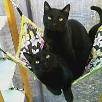 Adopt A Pet :: Prince - Calimesa, CA