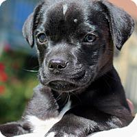 Adopt A Pet :: Roxbury - Bedford, VA