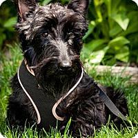 Adopt A Pet :: Leanna-adoption pending - Omaha, NE