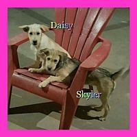 Adopt A Pet :: Skyler & Daisy - Los Angeles, CA