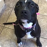 Adopt A Pet :: Zoe 6944 - Joplin, MO
