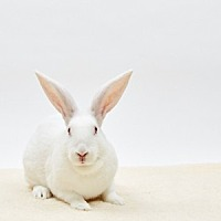 Adopt A Pet :: Jitterbug - Mill Valley, CA