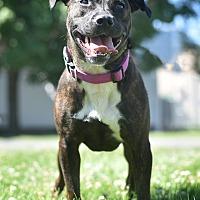 Adopt A Pet :: Dove - St. Louis, MO