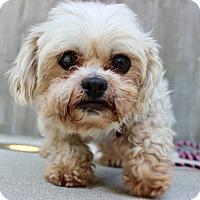 Adopt A Pet :: MarkyMark - Los Angeles, CA