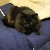 Adopt A Pet :: Pryne (Working Cat) - Wisconsin Rapids, WI
