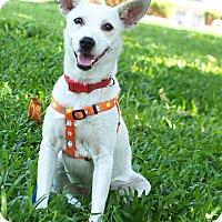 Adopt A Pet :: Jobby - San Mateo, CA