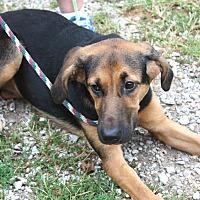 Adopt A Pet :: Mahi-Mahi - Sparta, NJ