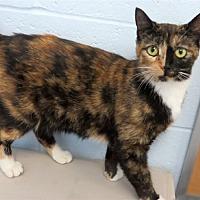 Adopt A Pet :: Mama Kitty - Indiana, PA