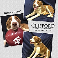 Adopt A Pet :: Clifford - Hearne, TX