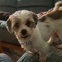 Adopt A Pet :: CoCo - LEXINGTON, KY