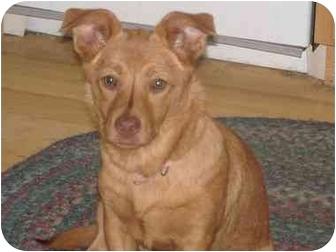 Shepherd (Unknown Type) Mix Puppy for adoption in Sacramento, California - Truffles Adoption Pending