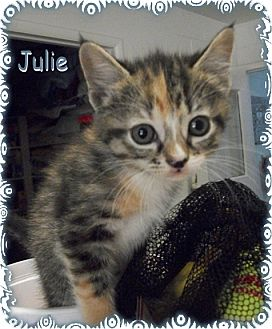 Calico Kitten for adoption in Ozark, Alabama - Julie