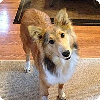 Adopt A Pet :: Lily - PENDING - Abingdon, MD