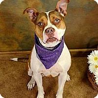 Adopt A Pet :: Bailey - Lapeer, MI