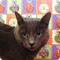 Adopt A Pet :: Venus - Albany, NY