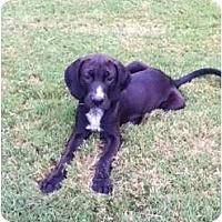 Adopt A Pet :: Levi - Adamsville, TN