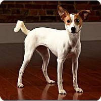 Adopt A Pet :: Suzy Q - Owensboro, KY