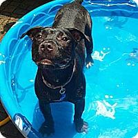 Adopt A Pet :: Honey - Clarksburg, MD