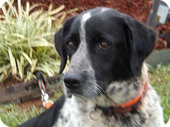 English Pointer Mix Dog for adoption in Thomaston, Georgia - Marlene