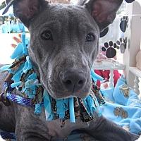Adopt A Pet :: Dakota - Pompano Beach, FL