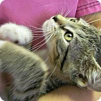 Adopt A Pet :: Legolas - Toledo, OH