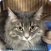 Adopt A Pet :: LouLou - Edmonton, AB
