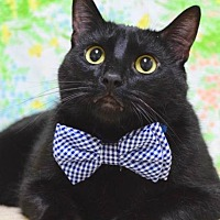 Adopt A Pet :: Desmond - Campbell, CA