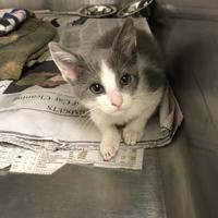 Adopt A Pet :: Jennings - Miami, FL
