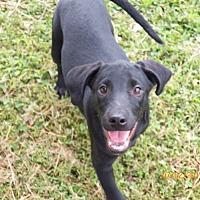 Adopt A Pet :: Sister Deloris - Boston, MA