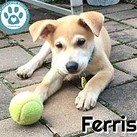 Adopt A Pet :: Ferris - Kimberton, PA