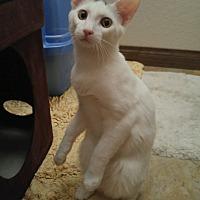 Adopt A Pet :: Winchester - Winchester, CA