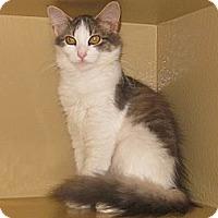 Adopt A Pet :: Whiskers - Farmingdale, NY