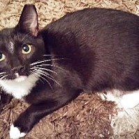 Adopt A Pet :: Crowley - Miami, FL