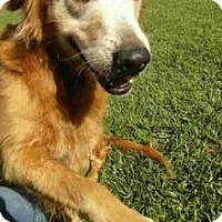 Adopt A Pet :: Mollie - New Canaan, CT