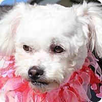 Adopt A Pet :: Pixie - La Costa, CA