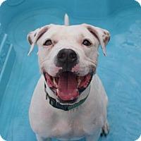 Adopt A Pet :: Bronx - Prospect, CT