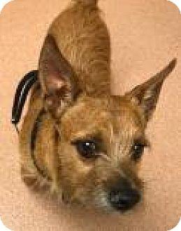 Terrier (Unknown Type, Medium) Mix Dog for adoption in Columbus, Georgia - Toby 8305