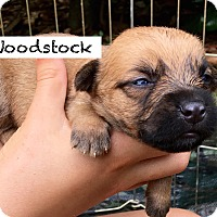 Adopt A Pet :: Woodstock - Alpharetta, GA