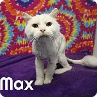 Adopt A Pet :: Max - Melbourne, KY