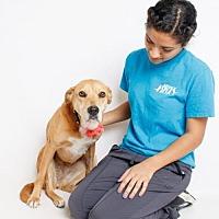 Adopt A Pet :: Josephine - Jefferson, LA