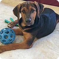 Adopt A Pet :: 'CHYO' - Agoura Hills, CA