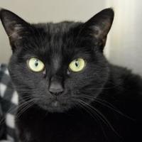 Adopt A Pet :: Deja - Annapolis, MD