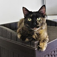 Adopt A Pet :: Marcella Pampa Franklin - Denver, CO